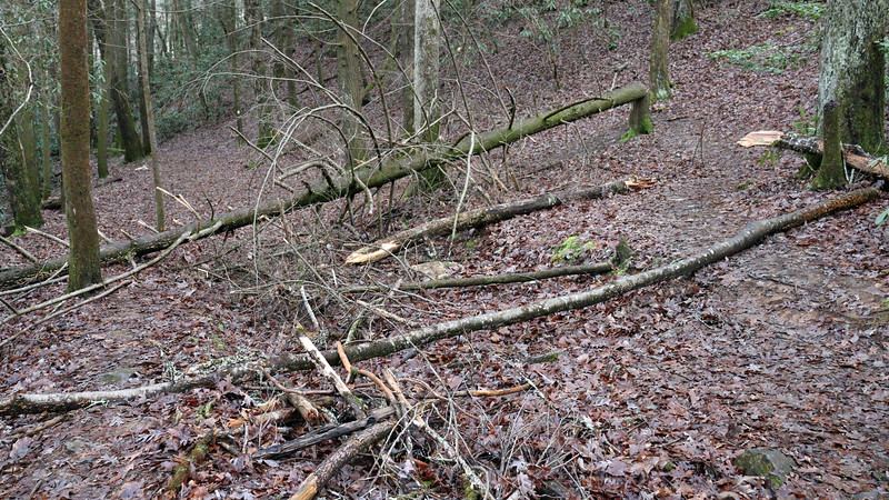There were a lot of fallen trees along the trail.