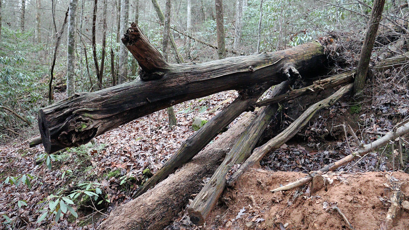 Another large fallen tree.  The chainsaw cuts indicate that basic maintenance seems to be performed at least periodically.