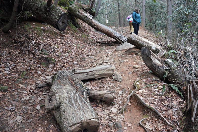 A very large fallen tree.