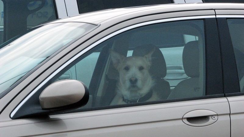 This guy was hanging out in his car, probably waiting while his human(s) were having breakfast.