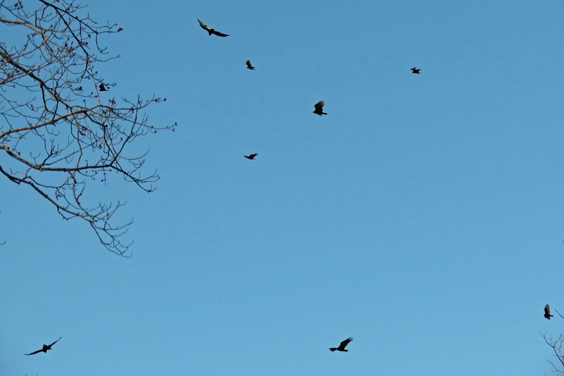 There seemed to be at least 20 birds in the air at any given moment.