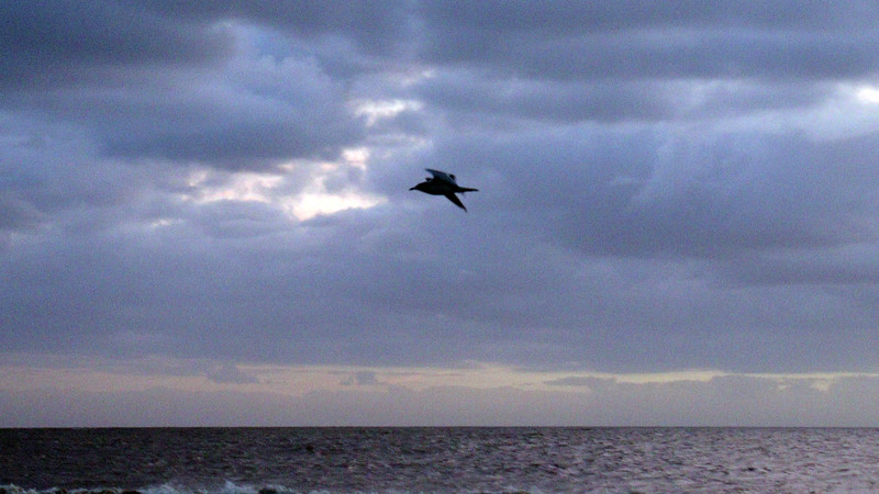 Another island visitor flew by.