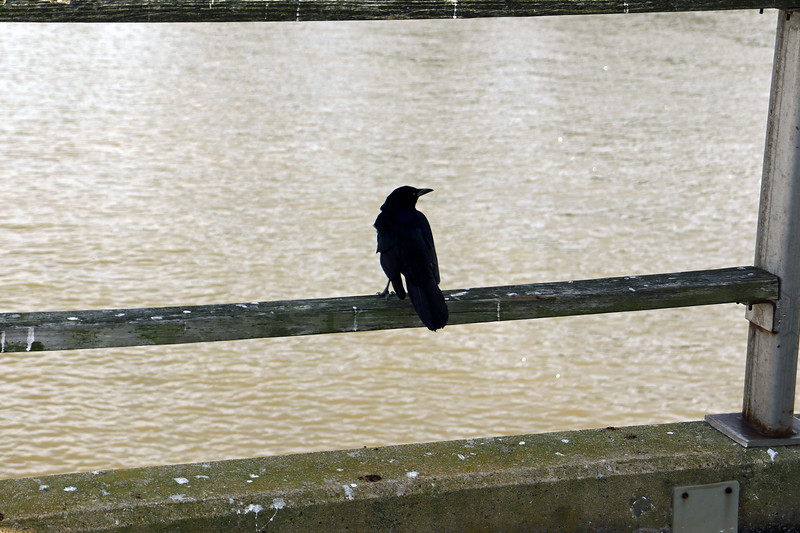 This particular pier visitor was quite vocal.