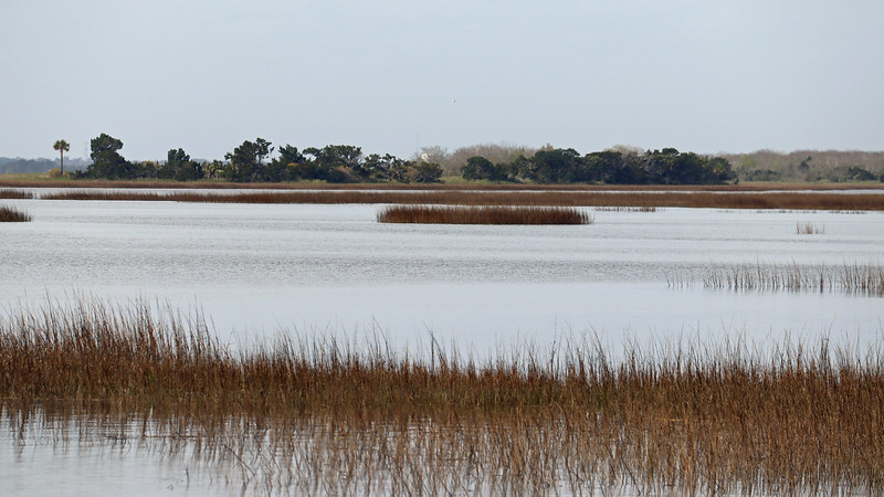 Zooming in on the marsh.