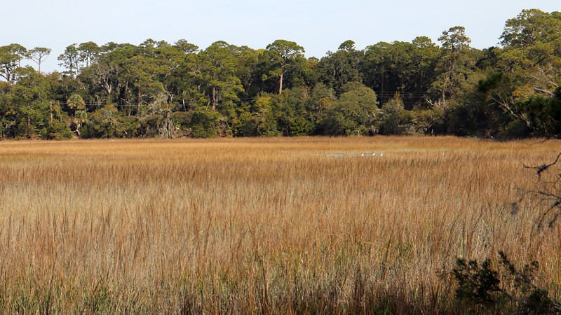 This seems like a great place to just sit and relax while looking out over the marsh.