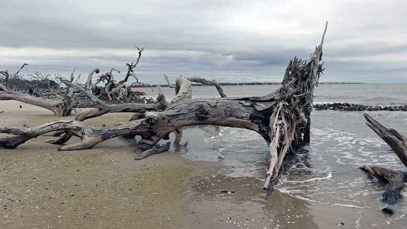 """It's easy to understand why Driftwood Beach has been described as, """"picturesque,"""" and is probably the most photographed location on the island."""
