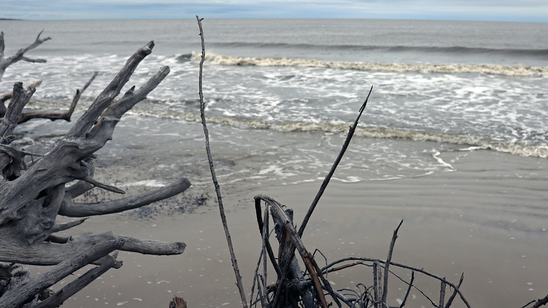 This has a lot to due with the tides.  At high tide, like it was during our visit, there isn't much available beach, thus forcing us to climb through the dead trees.