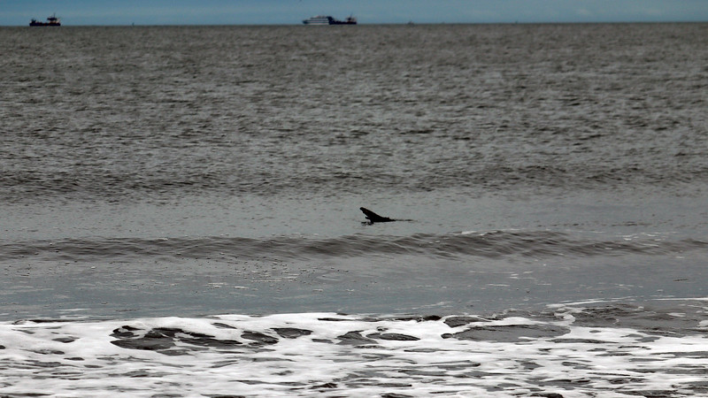 Earlier, we heard some Oohing and Ahhing from other beach visitors who had spotted several dolphins.  I pointed the camera only to discover that I was zooming in on a piece of wood.