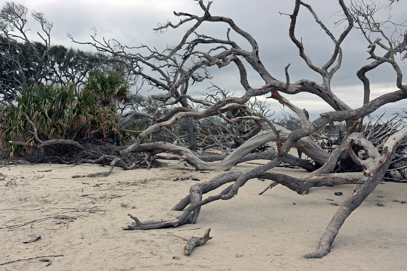 Driftwood Beach is also a popular destination for amateur photographers, of which there were many today.