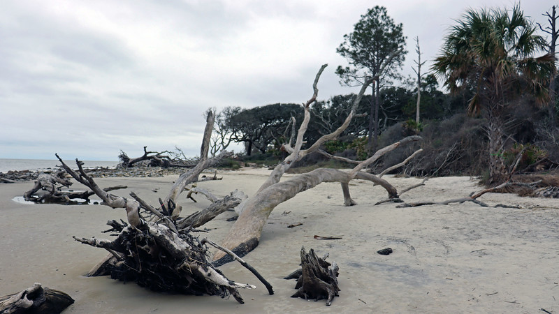 Driftwood Beach is located at the northern end of the island, taking up the space in between the Clam Creek Picnic Area and the Villas by the Sea Resort.