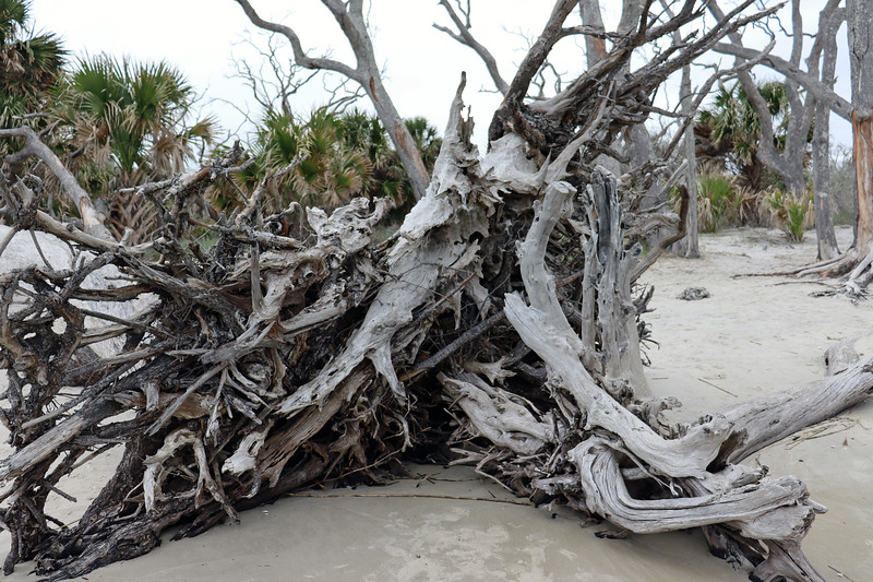 The result is a beach that has become a tree graveyard.