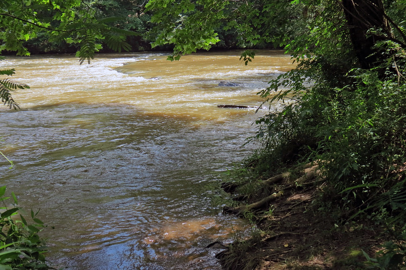 Thanks to a recent abundance of rain, the river seemed quite high today.