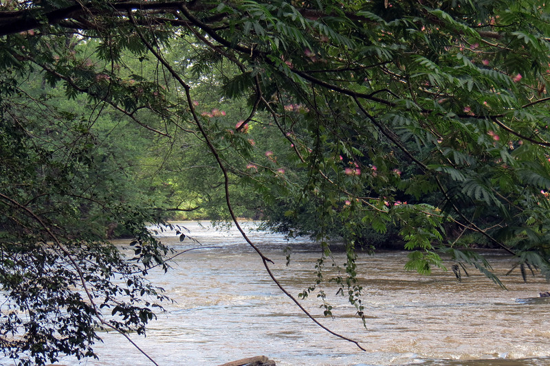 The photo above looks downstream.  There isn't anything happening in this direction until the North Oconee River meets with the Middle Oconee River about two miles away to form the Oconee River.