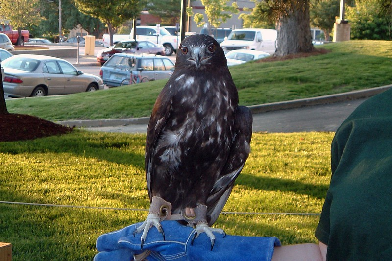 I believe this is some kind of extremely photogenic hawk who took a great picture.