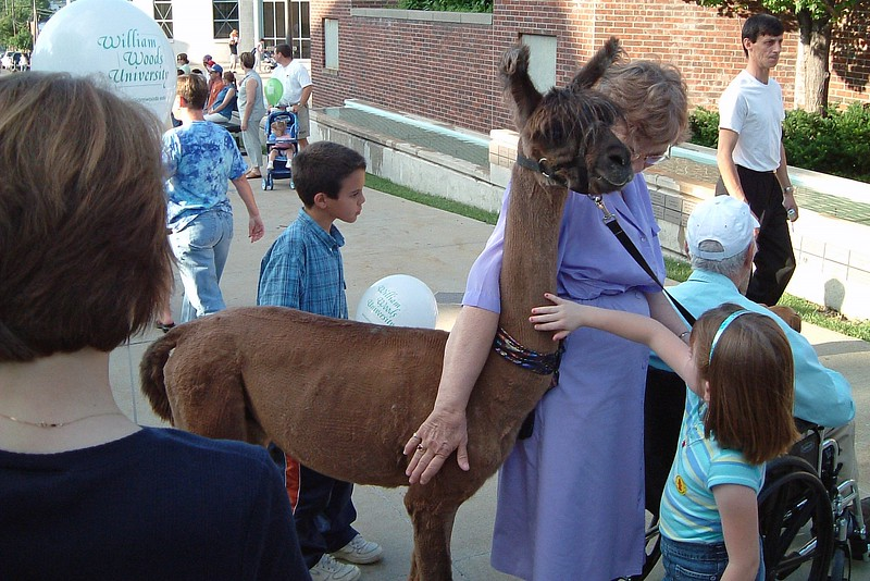 Several animals were being featured at the amphitheatre at the courthouse including this Peruvian Llama.
