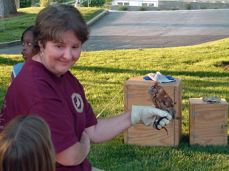 This is an Eastern Screech Owl.