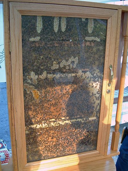 Beekeeping display at Flat Branch Park.