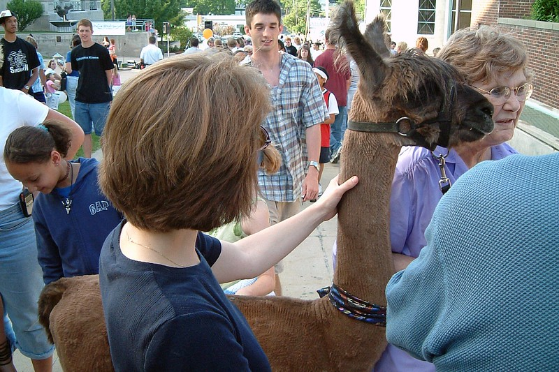 """This llama was rather friendly and described as a """"therapy animal,"""" although I'm not sure what that meant."""