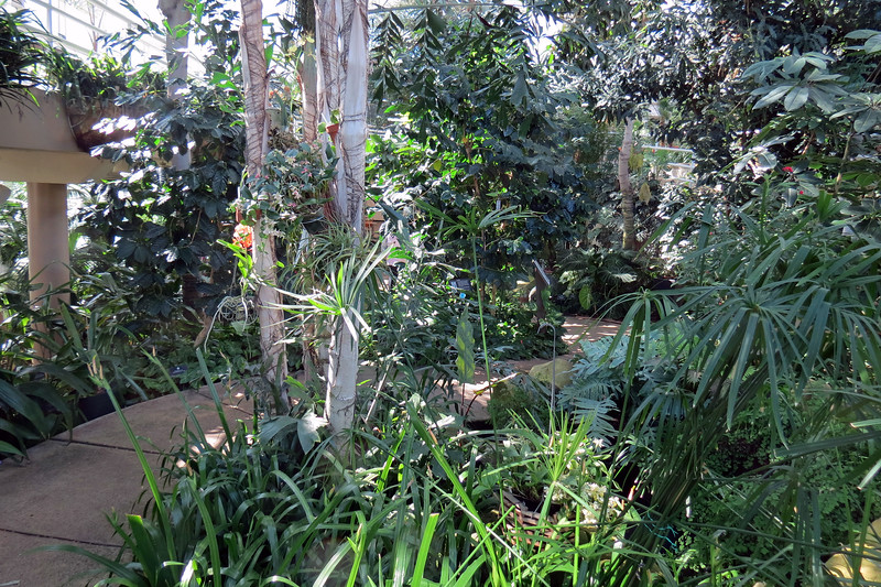We continued following the indoor path past an area filled with tropical plants.