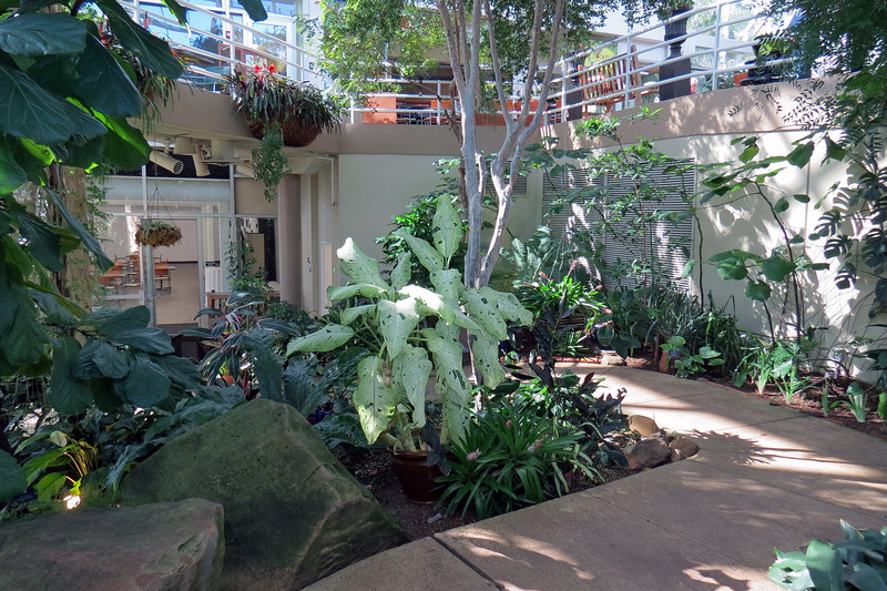 The area seen in the photo above contained tropical ornamental plants.