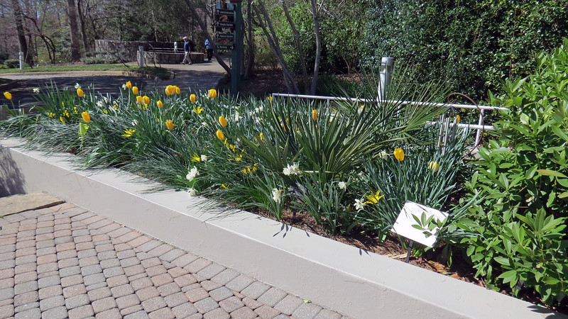 Tulips and daffodils line the entrance to the Visitor Center.