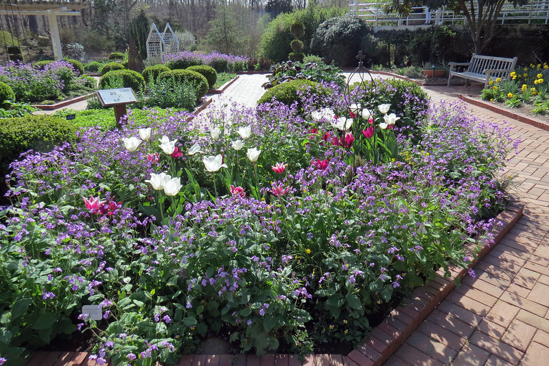 Beautiful flowers in the Herb Garden.