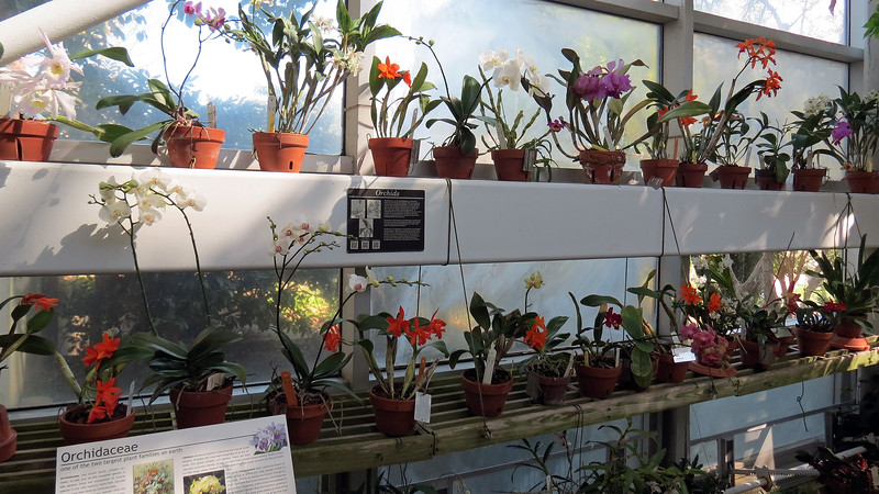 There were many varieties of orchids on display.