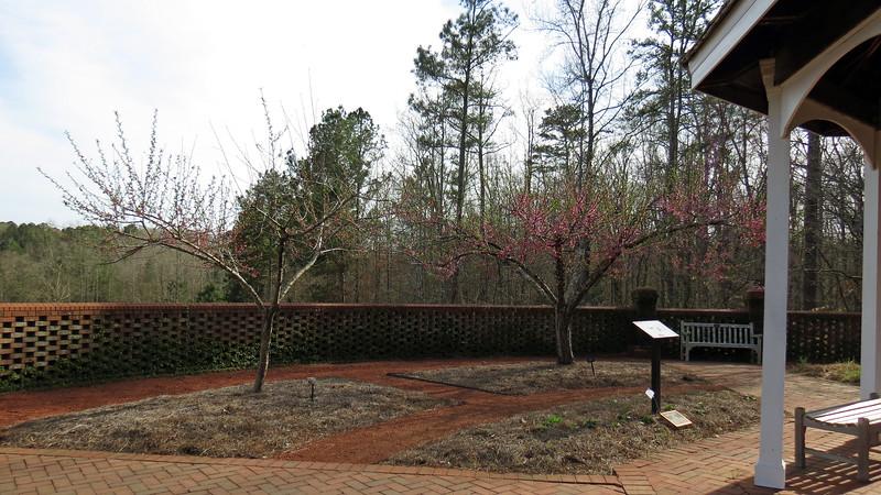 Belle of Georgia Peach trees.