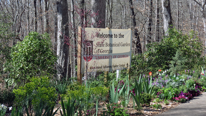 Danita and I headed to the State Botanical Garden of Georgia today to see what was blooming.