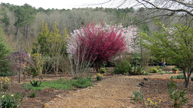 The two blooming trees, one in front of the other, created a great contrast of color.
