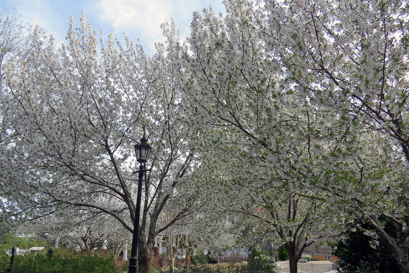 This was the perfect time of the season to see the many flowering trees.