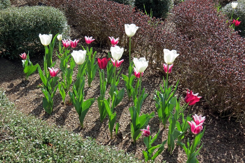 I love the way blooming tulips were scattered throughout everything.