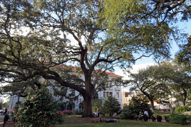 Enjoying a nap under a giant oak tree sounds like a good way to spend the afternoon.