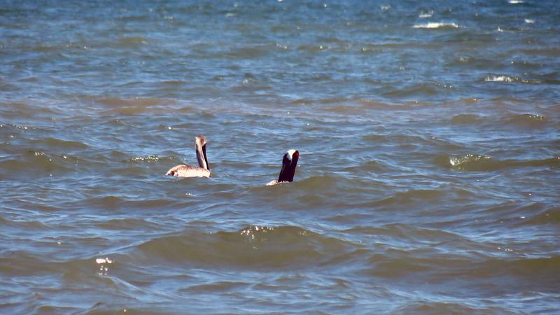 A couple of birds off shore.