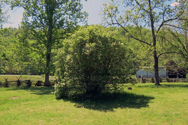 I liked the large flowering shrub.