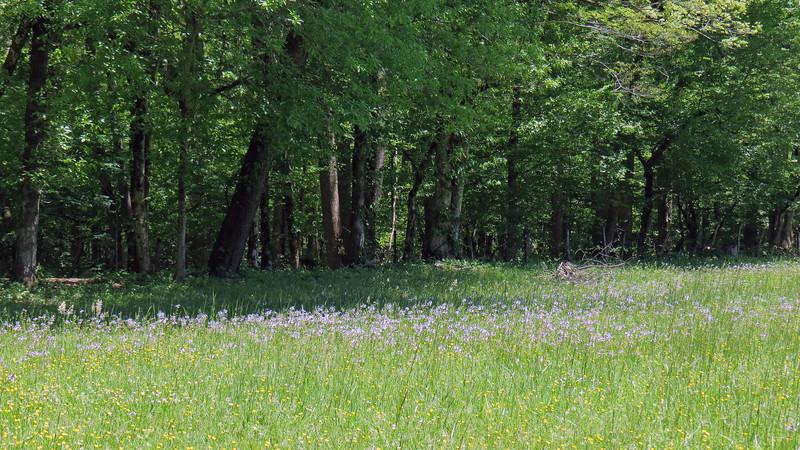 Flowers in the field behind the Enloe Barn.