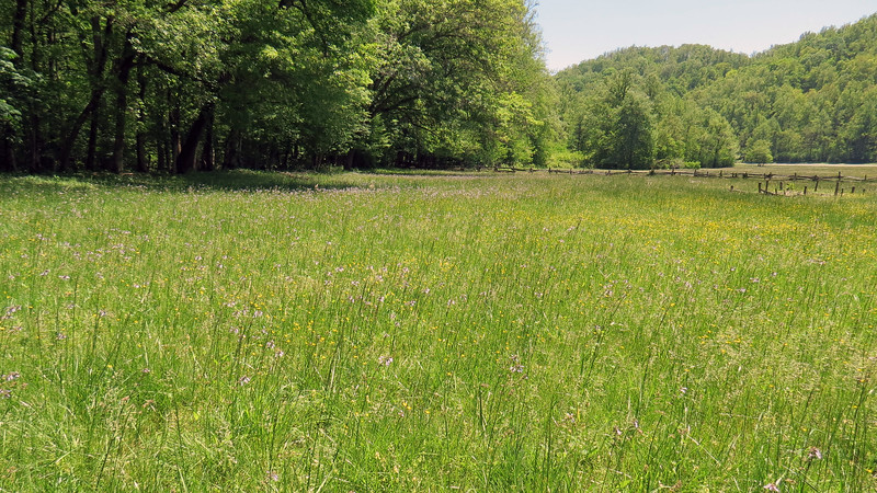 The field behind the Enloe Barn was full of small bright flowers.