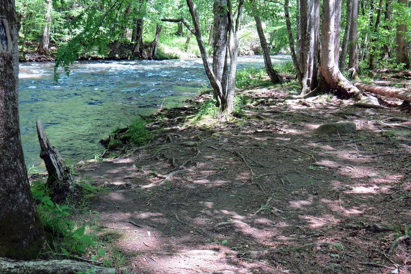 Shore along the Oconaluftee River.