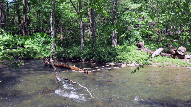 A couple of dead trees had fallen over into the Oconaluftee River.