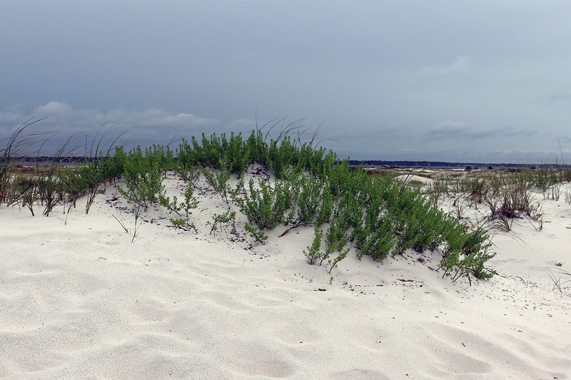 Sand dunes at the beach parking area.