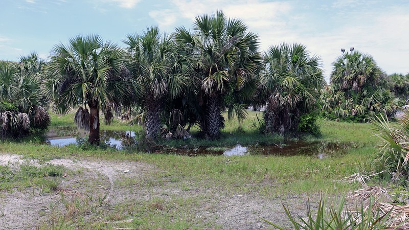 This vacant lot sits in between the Four Points and the Boardwalk, but in front of the Gulfarium.