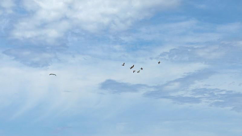Air traffic overhead.