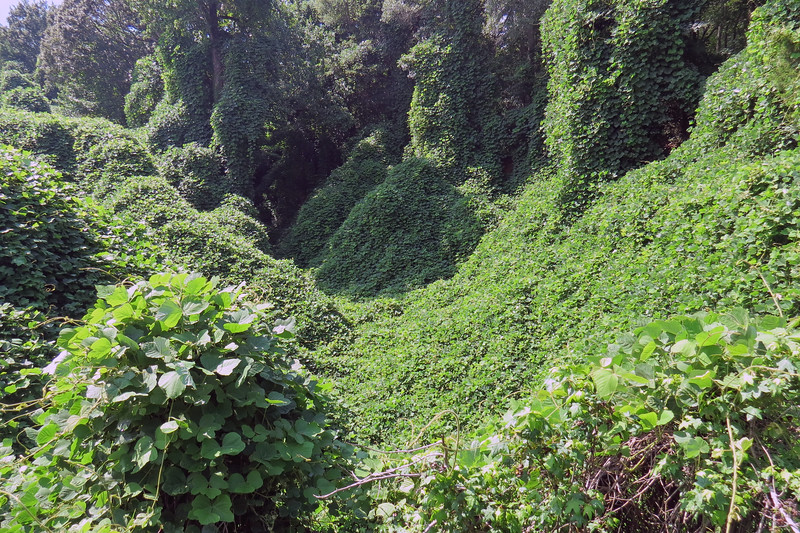 The Kudzu vines provided a great distraction during my stop.