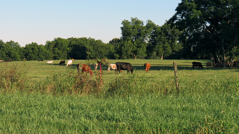 I spotted more locals hanging out in the field next to me.