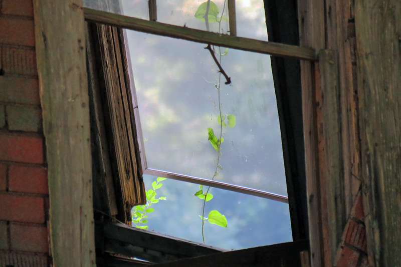 Interesting shot through the window of a vine growing in the house.