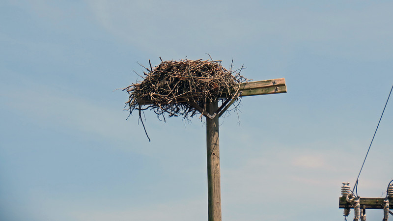 This was quite a large nest.