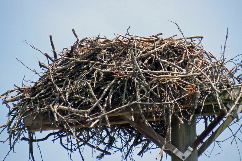 It's hard to tell with the zoom lens.  But I would guess this nest to be about 3 feet in diameter.