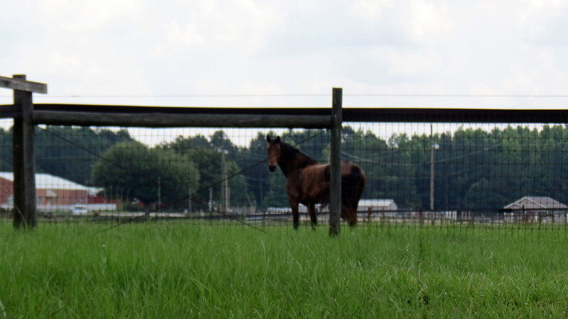 I passed by a horse farm on Union Church Road.