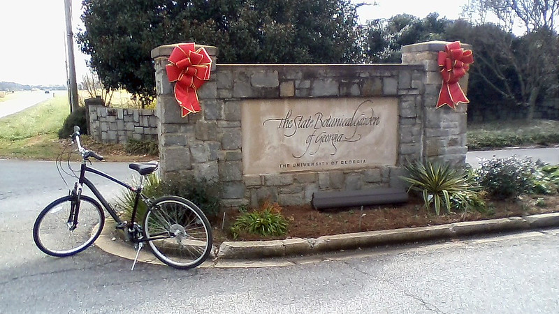 December 19, 2017:  From the top of the hill in the previous photo, I rode to the end of Riverbend Road and turned left onto South Milledge Avenue heading toward the Botanical Garden and another photo op.