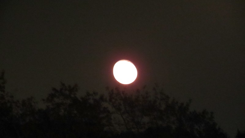 """I tried to take a few pics of the """"Supemoon"""" that was on display this evening."""